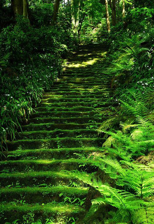 鎌倉妙法寺 #緑 #Green #Kamakura
