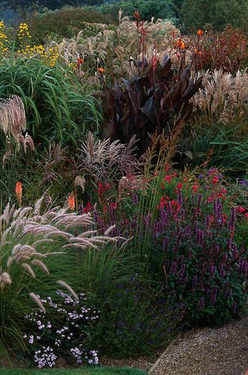 116 best images about ornamental grasses on pinterest for Border grasses for landscaping