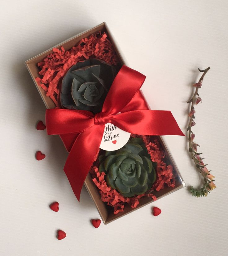 Valentines Succulent Gift Box by CandSBoutiqueShop on Etsy