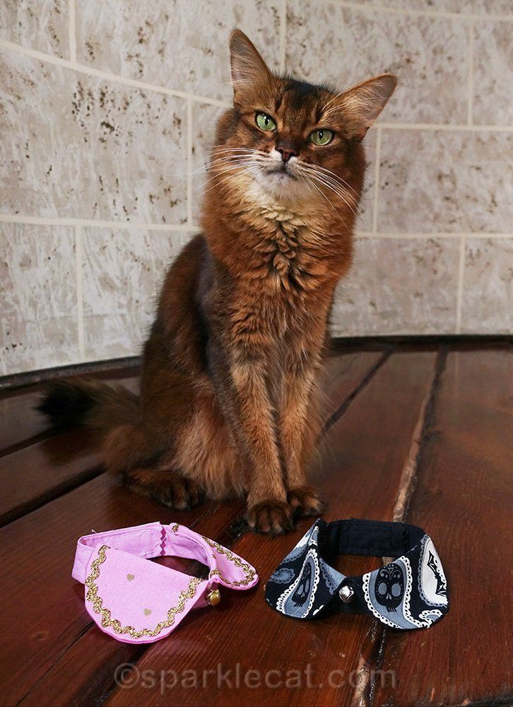 55c246a53f2e27a738fa49e5d8b15e5a - How To Get My Cat To Wear A Collar