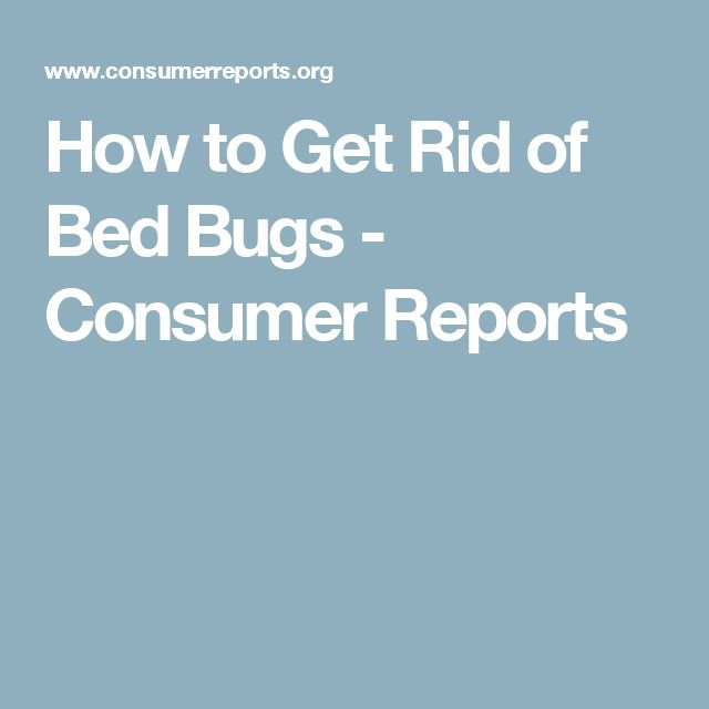 The 25+ Best Bed Bug Report Ideas On Pinterest