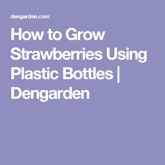 How to Grow Strawberries Using Plastic Bottles | Dengarden