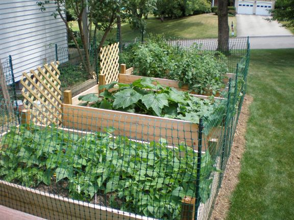 raised bed vegetable garden fence - Google Search | Small ...
