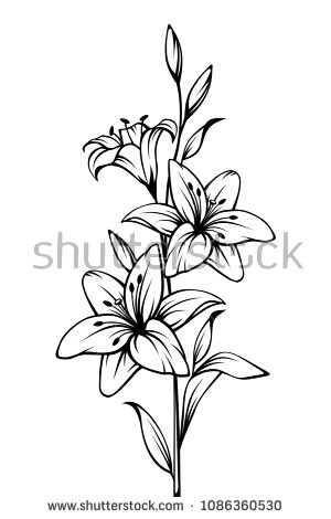 Vector black and white contour drawing of lily flowers. – Tattoo