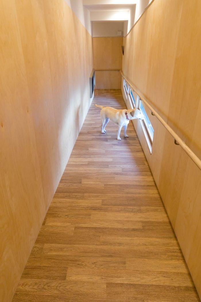 大型犬が駆けまわる人にも犬にも優しいスロープハウス 犬 家 ハウス 小さい家