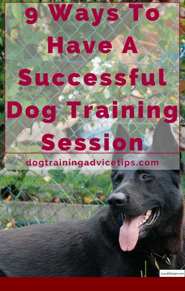 Train Dog To Stop Barking At Tv And Pics Of Dog Training Tips On
