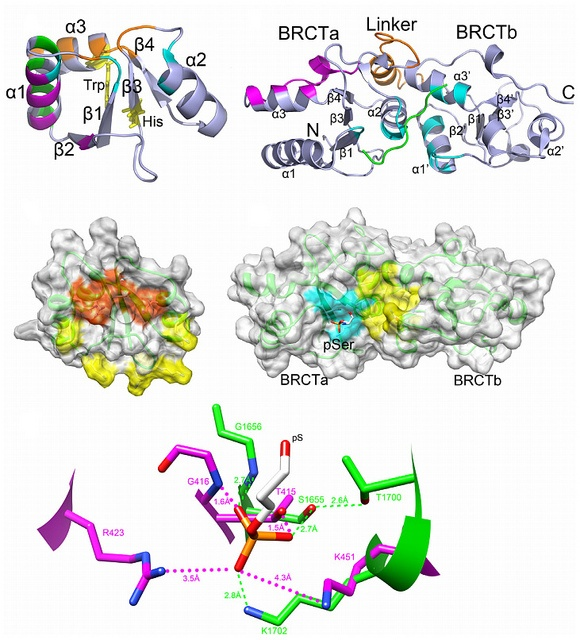 23 Best Misc. Protein Structures Images On Pinterest