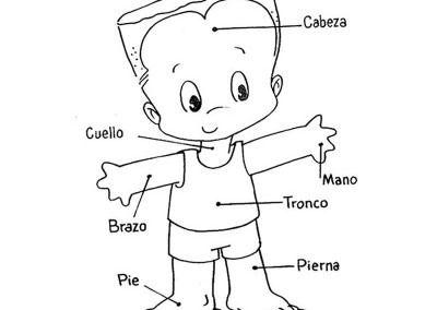 Dibujo De Cuerpo Humano Para Colorear Cuerpo Humano Dibujo Cuerpo Humano Cuerpo Humano Para Ninos