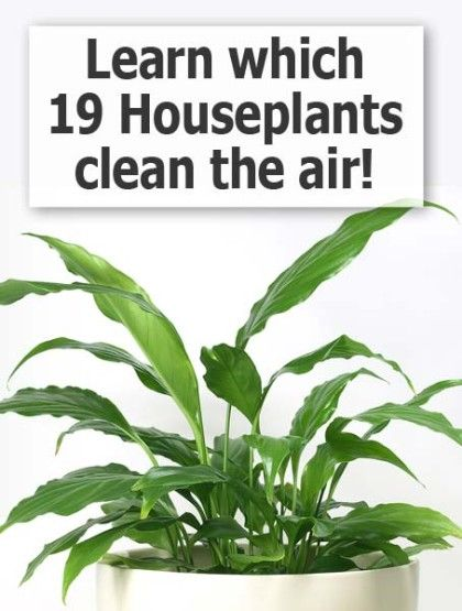 types of houseplants that clean indoor air decorating the home pinterest. Black Bedroom Furniture Sets. Home Design Ideas