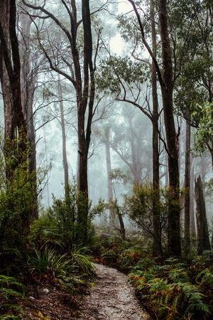 EMILY OBRIEN | https://emilyobrienlifestyle.com    Tasmanian Rainforest Photographic Print