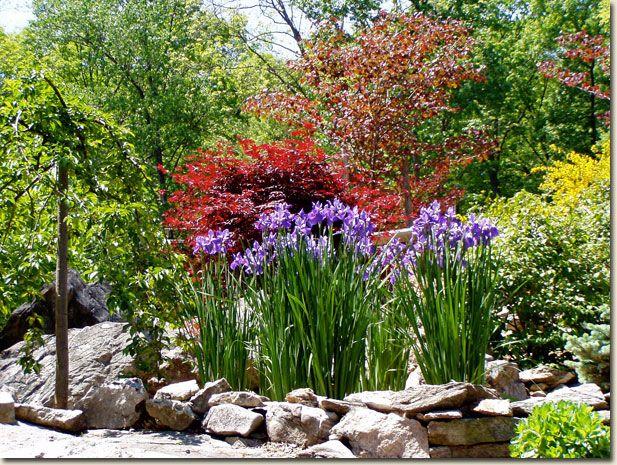 Irises In Rock Garden