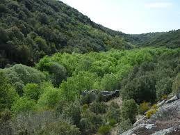 Bosque de Ribera y Bosque mediterráneo. En esta foto podemos observar los distintos tipos de bosque,