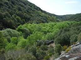 Bosque de Ribera y Bosque mediterráneo. En esta foto podemos observar los distintos tipos de bosque, por un lado el verde más intenso pertenece al Bosque ...