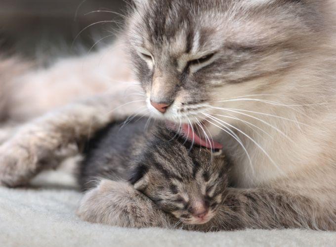 En voilà des parents fiers et de belles photos de famille ! Découvrez une sélection de 14 photos de familles spécial félin ! #1 Maman…