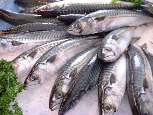 Post image for Sustainable Seafood: What Does It Really Mean?