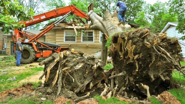 Tree removal tips and costs