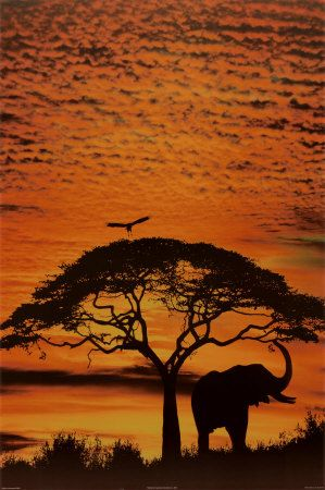 African SkiesBuckets Lists, Southafrica, African Safari, Silhouette, Sunsets, Elephant, South Africa, Trees, Lion King