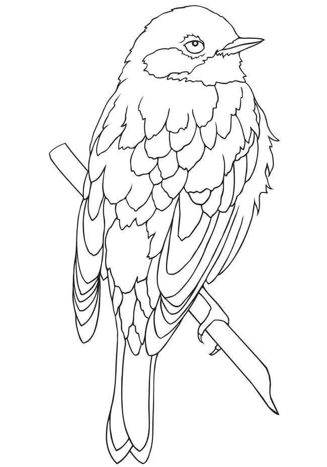 1829 best Coloring books for adults images on Pinterest | Colouring ...