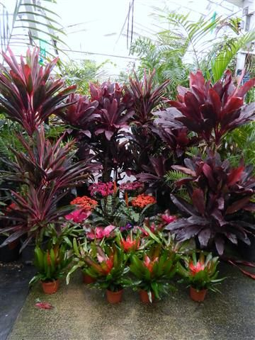 Add some flair to your garden with a few tropical plants! Get tropical plant tips at Tropical Twist on March 13, 2013 @ 7 pm. Register for this program online @ www.aapld.org or in the Library.