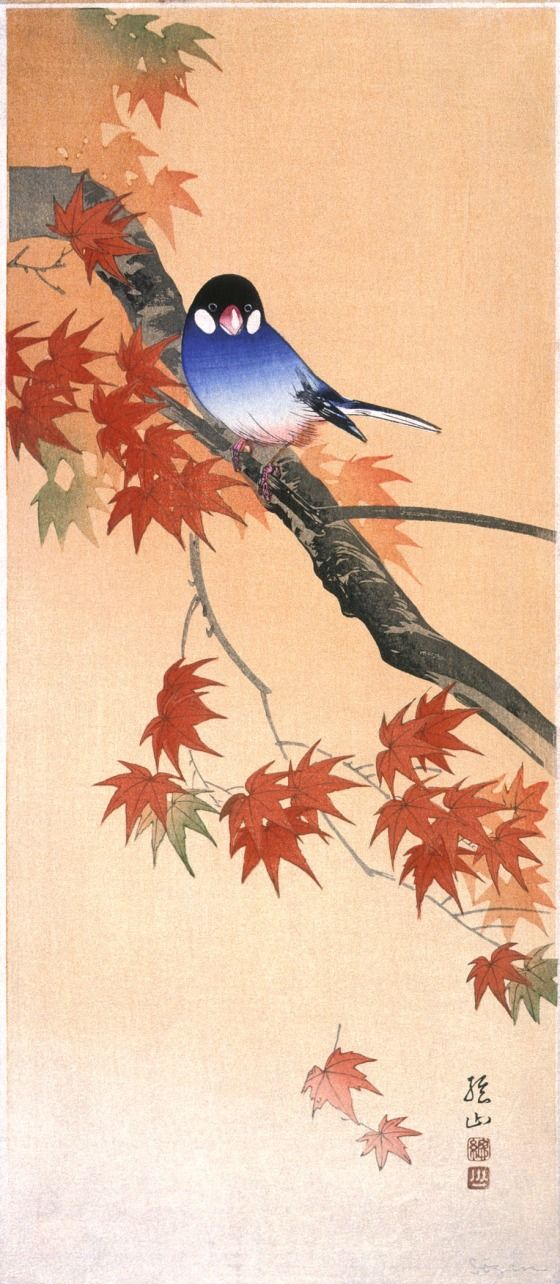 Bluebird on Autumn Maple Branch Itō Sōzan (Japan, born 1884) 20th century Prints; woodcuts Color woodblock print Image: 14 15/16 x 6 7/16 (38 x 16.4 cm); Paper: 15 1/16 x 6 5/8 in. (38.3 x 16.8 cm) Gift of Mr. and Mrs. Felix Juda (M.73.37.541) Japanese Art