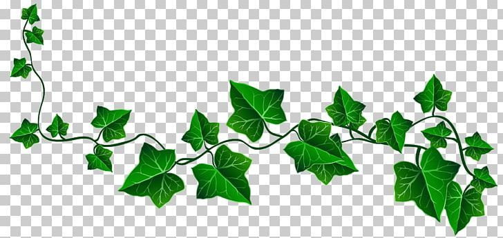 vine ivy drawing png - branch, byte, clipart, clip art, decoration | ivy  draw, vine drawing, family tree drawing  pinterest
