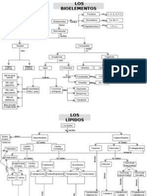 Mapas Conceptuales Anabolismo Catabolismo Y Otros Mapa