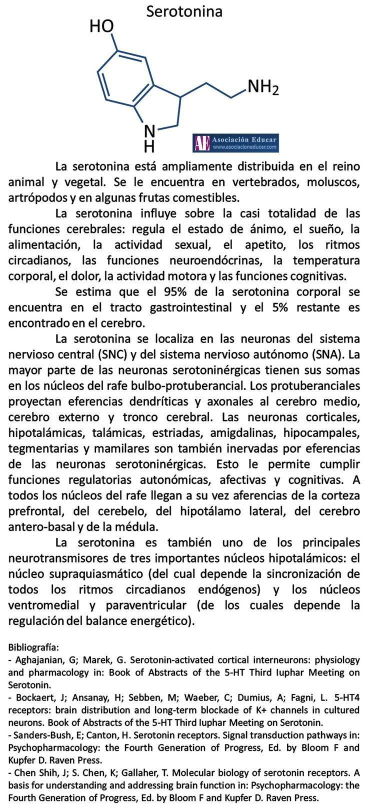 Infografía Neurociencias: Serotonina. | Asociación Educar