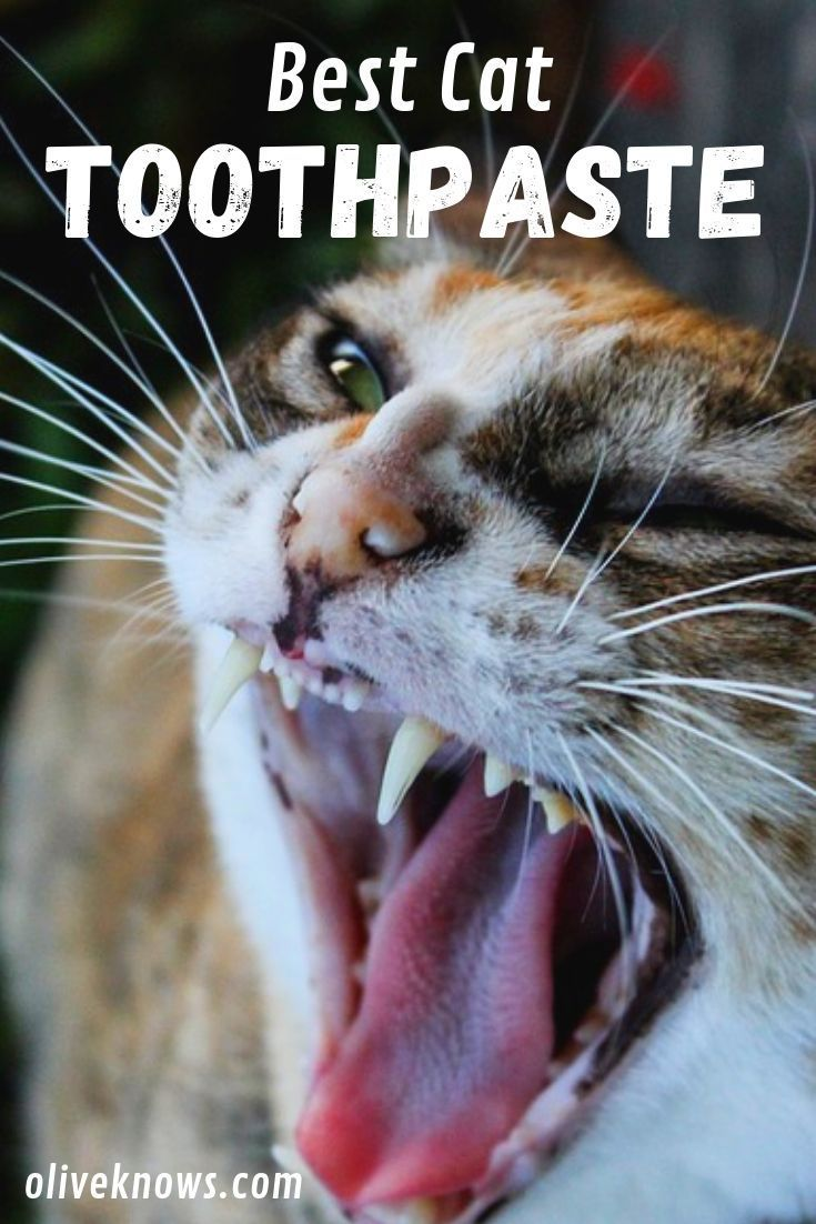 The Best Cat Toothpaste For Your Cat Cool Cats Cats Cat Health