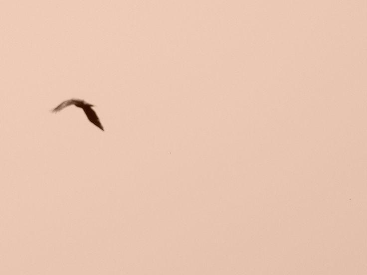 Bird Photo: Beata Bauer