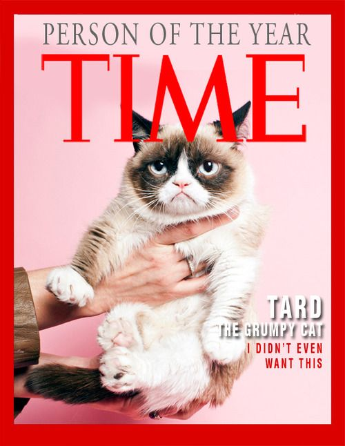 17 Best images about Grumpy Cat on Pinterest | Cats, Merry ...