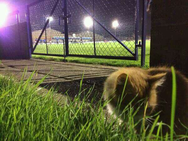 A cat that was more entertaining than the first half last night