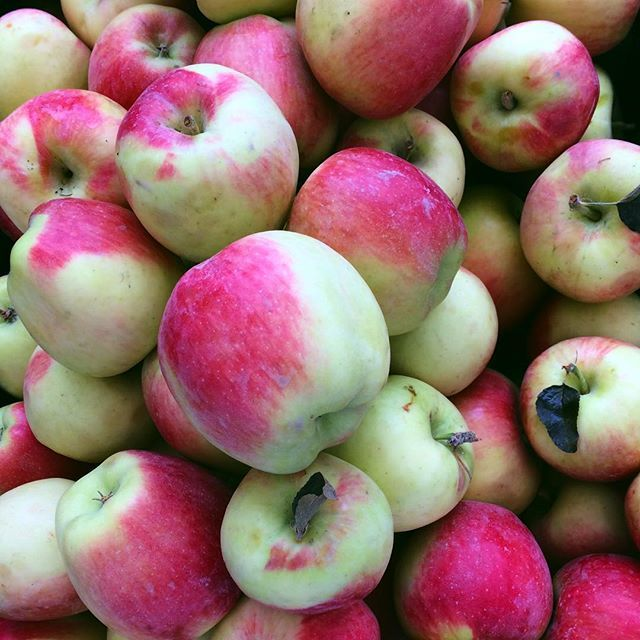 How do you like them apples?  Fall | Seasonal Fruit | Season and Serve Blog