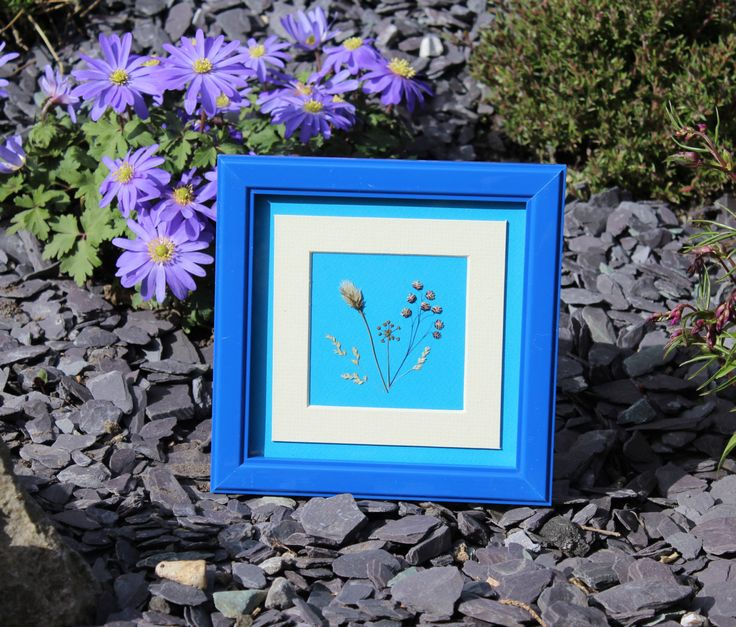 Hand Pressed Irish Wild Flower Picture ~ Royal Blue Frame 15x15cm ~ Guaranteed Irish ~ A Gift from Ireland ~ Connemara wild flowers ~ by TheOwlTreeIreland on Etsy