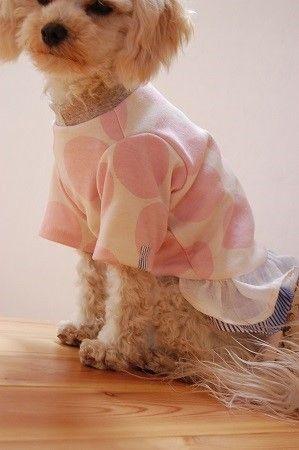 桜色の大きなドットに2段のフリルスカートを付け子供服のような犬服に仕立ててみました^^これからの気持ちのよい季節にぴったりの爽やかでかわいらしいお洋服ですお袖...|ハンドメイド、手作り、手仕事品の通販・販売・購入ならCreema。
