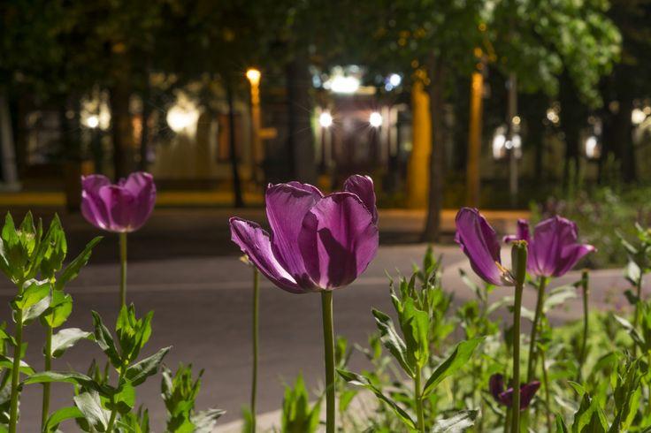 https://flic.kr/p/rN6W3B | Flower in nightlights