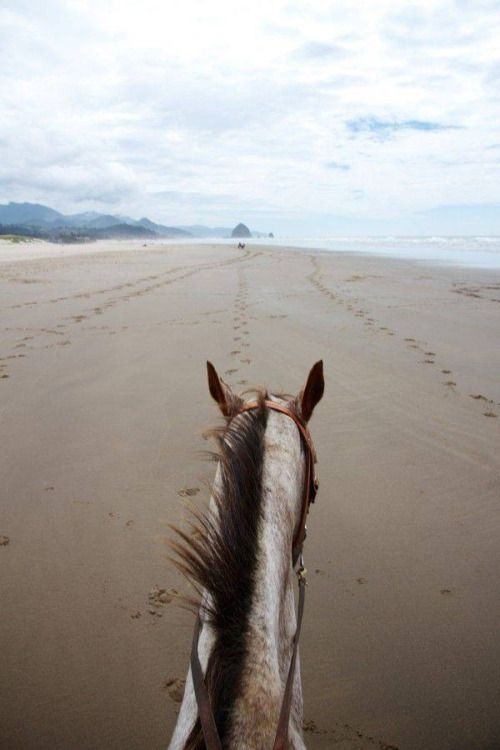 On The Back Of Beauty By Edward Pride Find This Pin And More Horse Phone Wallpapers