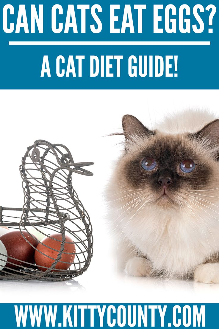 Can Cats Eat Eggs A Comprehensive Cat Care Guide Kitty County In 2020 Cats Cat Diet Cat Health