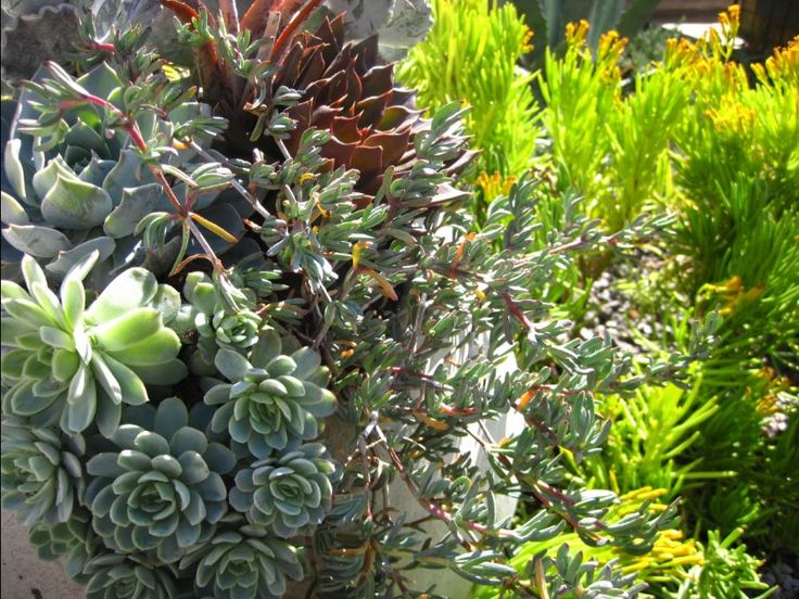 Beautiful succulent combination trailing out of planter