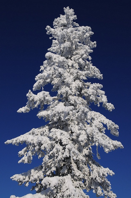 Snörikt träd Snowy Tree