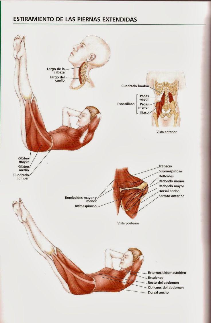 45 mejores imágenes de Pilates espalda sana en Pinterest | Ejercicio ...