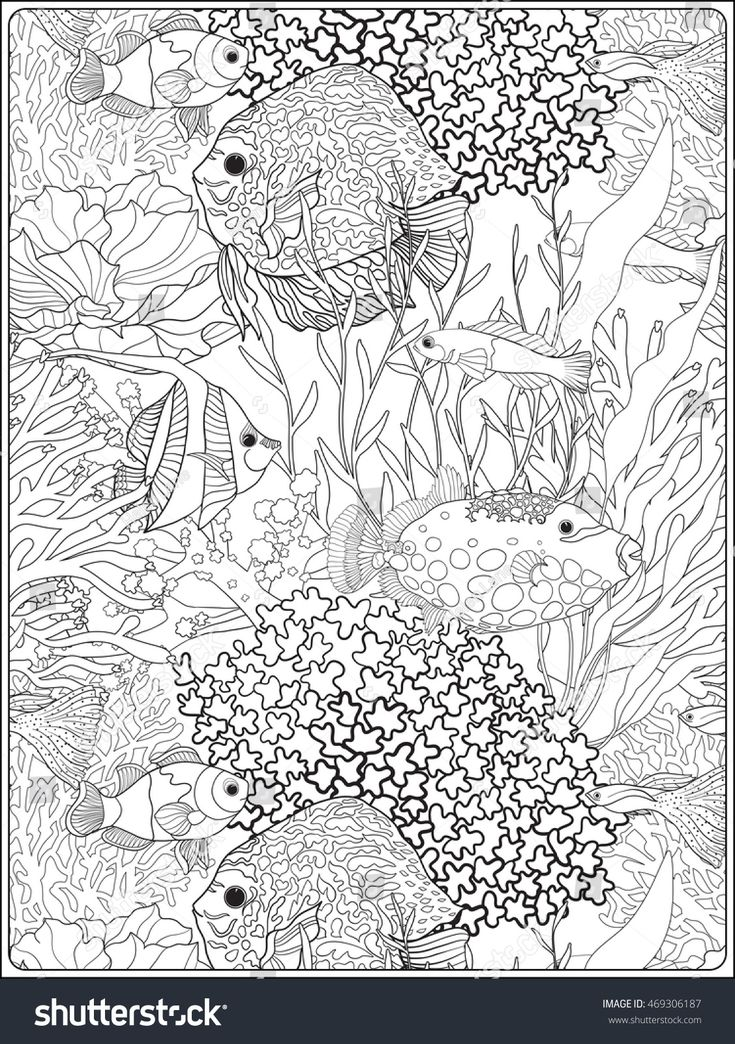 645 best Animals images on Pinterest Coloring pages, Adult - best of under the sea coral coloring pages