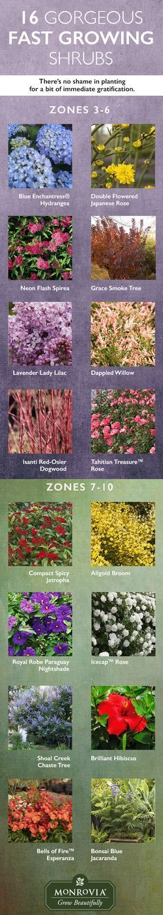 A mature garden takes time and is so worth the wait, but that doesn't mean you can slip in a few shrubs that grow more quickly and add plenty of bling to the landscape.