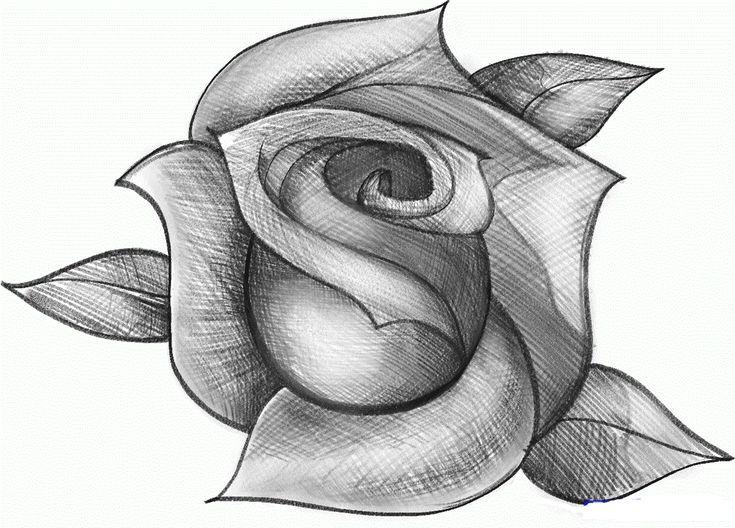 рисунок розы картинки фотографы видном