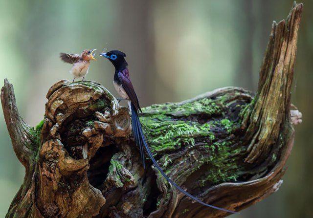 vogels-jongen