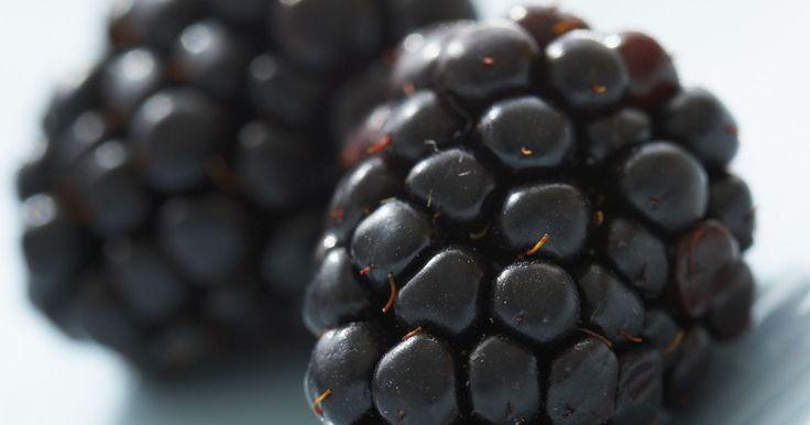 Cómo lavar moras. Las moras reciben su nombre por su color púrpura oscuro. Son similares a las frambuesas, pero no tienen un centro hueco. Al recoger moras, busca la fruta que sea brillante, de color oscuro y suave. Las moras duras y de color rojizo todavía no están maduras. Se usan popularmente para jarabes, mermeladas y jaleas y en los productos horneados como ...