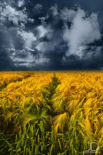 17 Best Ideas About Wheat Fields On Pinterest Fields
