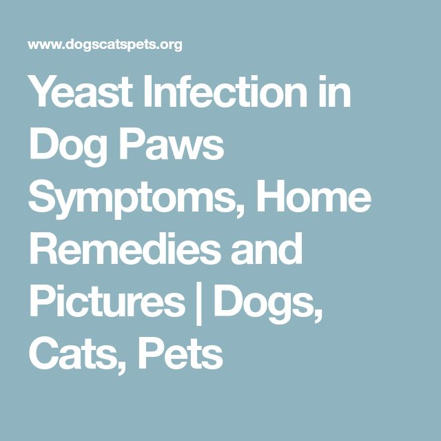 Yeast Infection in Dog Paws Symptoms, Home Remedies and Pictures | Dogs, Cats, Pets