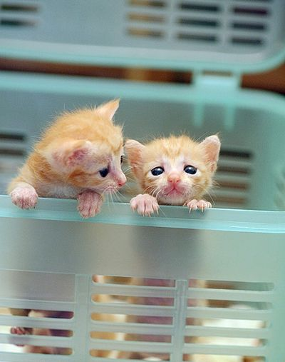 """Don't worry, I has a plan to break us outta here!"" #kittens"