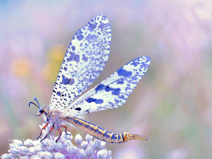 The nuptial flight... (Thierry Dufour / Aubenas / France) #NIKON D810 #macro #photo #insect #nature