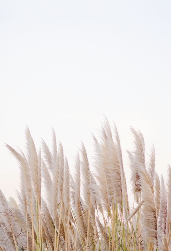 creamy neutral field | Minimalist photography, Aesthetic ...